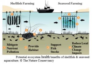 TNC seaweed aquaculture benefits